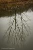 Tree Upside-down (Paul Henman) Tags: toronto 8thanniversaryparty 2017 torontophotowalks paulhenman evergreenbrickworks ontario topw2017rs paulhenmanphotographyca httppaulhenmanphotographyca brickworks topw
