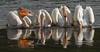 IMG_7346 Pelicans feeding (cmsheehyjr) Tags: cmsheehy colemansheehy nature wildlife bird pelican americanwhitepelican yellowstone yellowstoneriver yellowstonenationalpark wyoming pelecanuserythrorhynchos