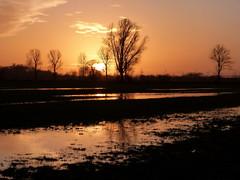 Sonnenuntergang in Neuenkirchen (Maritime Fotografie) Tags: sonnenuntergang sunset bremerhaven möwe landschaft maritim weser dämmerung abend martin tolle himmel