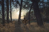 Self Portrait (jordigasion) Tags: autumn songwriter trees landscape sunrise sunset sunlight nikon nature mountain background back men lonely cover backlight catalonia lleida beauty sunshine music sky blue colors