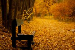 Colores de Otoño (2) (Soleil Belice) Tags: fuentesdelmarqués caravadelacruz otoño murcia parque hojas ardilla