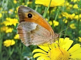 Butterfly 1508