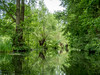 Spreewald (Ina Hain) Tags: spiegelung spiegel outdoor landscape landschaft grün erholung ruhe laubbäume wald bäume fliess kanal wasser lausitz brandenburg natur spreewald