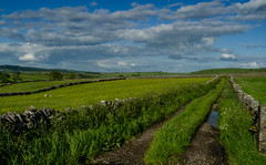 Country Lane, Midsummer (Peter Quinn1) Tags: litton peakdistrict derbyshire june countrylane