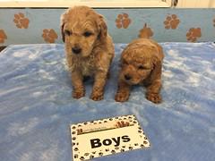 12-3 Roxie Boys_Pic 4