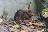 Rabbit (maclapt0p) Tags: ouwehandsdierenpark rhenen animals netherlands nederland