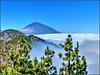Parque Nacional del Teide (etoma/emiliogmiguez) Tags: tenerife islascanarias españa parquenacionaldelteide laesperanza mardenubes teide volcán pinos