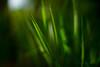 (Daniela Romanesi) Tags: 7897 green grass grama mato verde floresta forest deep natureza nature jardim garden carlzeiss 50mm classic