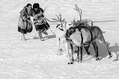 Khanty-113 (Polina K Petrenko) Tags: farnorth russia siberia culture ethnic holiday indigenous khanty localpeople nikon reindeer traditional