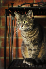 Happy Caturday! (Monica Muzzioli) Tags: cat kitty texture light eyes gatto coth5 caturday animaledomestico
