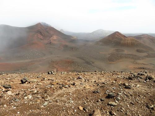 starr-171017-0713-Dubautia_menziesii-view_from_rim_Kalua_Mahoe_and_Puu_Nole-Puu_Naue_Haleakala_National_Park-Maui