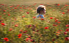 1111 (Fourteenfoottiger) Tags: nature flowers remembrance poppies poppyfield running girl freedom movement emotion blur childhood memories remember ghostly happy landscape fields abstract icm