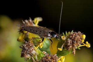 Roach Climber - _TNY_1860
