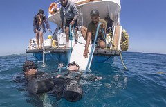 quadruple amputee man takes diving course 20 (KnyazevDA) Tags: disability disabled diver diving deptherapy undersea padi underwater owd redsea buddy handicapped aowd egypt sea wheelchair travel amputee paraplegia paraplegic