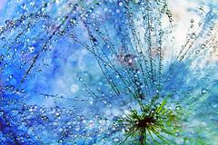 Visualization (kevin_art) Tags: droplets driplets dripsdropsandsplashes dew
