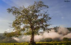 A lonely tree (Jotha Garcia) Tags: junco asturias españa spain tree sky mountains montañas nubes clouds principadodeasturias ribadesella alonelytree naturaleza nature september septiembre 2017 verano jothagarcia nikond3200 nikkor180550mmf3556 serenidad serenity paisaje landscape summer 7dwf