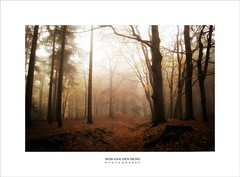 can you hear the silence? (Zino2009 (bob van den berg)) Tags: forest wald nebel mist fog herfst fall color trees leaves trunk silhouettes light sunlight sunday morning gold brown deventer holland november cold wet rain mood zino2009 2017 season