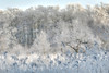 """Winter is Coming!"" (robin denton) Tags: askhambog yorkshirewildlifetrust york snowscape snowscene snow frost trees bog reeds"