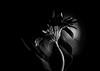 I Have Your Back ) (Natalia Medd) Tags: flower bw black white monochrome wire support gerbera nature