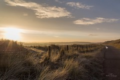 Frosty morning in Dutch dunes (Monika Kalczuga (on&off)) Tags: dunes duines huisduinen denhelder holland misty frosty frost grass tallgrass naturenetherlands europe path walkingpath morning light sky field sunrise