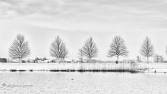 Snow-white [explored] (Ruud. (trying to catch up...)) Tags: ruudschreuder nikon nikond810 d810 bw zwartwit monochrome blackandwhite blackwhite noordbrabant brabant roosendaal brabantslandschap northbrabant netherlands tolbergvijver dutchlandscape landscape landschap paisajes paysage landschaft sneeuw snow schnee neige wit white weisz blanc