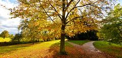 AUTUMN AT CROOME (chris .p) Tags: nikon d610 tree croome park landscape nt nationaltrust capture autumn 2017 england worcestershire november