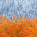 Frost & Fire by Ania Tuzel Photography