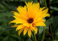 Sunshine. ( Explored ) (Bob.W) Tags: yellow attinghampark shrewsbury ngc coth5 sunrays5 npc