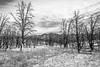 Chimney Basin Road, Inyokern, California (paccode) Tags: solemn landscape canyon bushes brush serious quiet fall california forgotten tree monochrome scary forest nationalforest flowersplants sky creepy mountain dirtroad blackwhite field inyokern unitedstates us