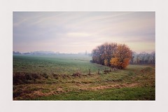 Fields and borders (spotfer) Tags: sarthe paysdelaloire france light morning sky edge tree trees field country tumblr flickr photographie photography art fujix landscape borders fields rural nature frame contrast sunset fujifilm potfersebastien