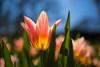 nature colors (Schwarzwaldfotograf) Tags: bloomy nature nikon d750 35mm 18 vc tamron dof bokeh colors field blüte