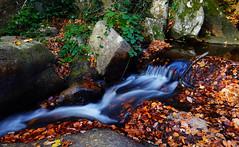 Agua corriente (candi...) Tags: agua rocas hojas hojassecas otoño corriente riera piedras montseny palo naturaleza nature sonya77 airelibre