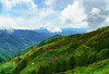 50 Shades of Green (ranierkeaneabad) Tags: mtpulag green nature a6000 sony trees travelph bundokph mountain landscape sky philippines pilipinas