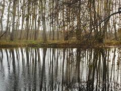 miroir d'eau (nic0v0dka) Tags: countryside country bucolique france aquitaine poitou spiegel miror miroir campagne fleuve rio river rivière