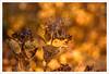 MMM7 (Outlaw Pete 65) Tags: macro closeup foglie leaves colori colours natura nature autunno autumn fujixe3 micronikkor55mm brescia lombardia italia