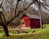 Farm Scene (R.A. Killmer) Tags: coup chicken farm red barn rural rustic nature outdoor animal old trees scenic d750 nikon