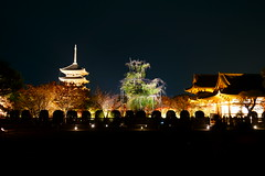 DSC05999 (MrSUIZOU) Tags: 京都 紅葉 ライトアップ kyoto 東寺 五重塔