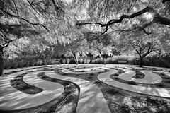 Sunnylands Winter Whitehouse (Roving Vagabond aka Bryan) Tags: park tree sunnylands palmsprings ca california monochrome soca socal explore labyrinth coachella valley bw blackwhite black white rancho mirage ranchmirage winter whitehouse