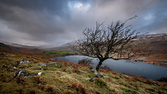 As the north wind blows.... (Einir Wyn Leigh) Tags: landscape wales walking tree weather winter december snow ice light mountains snowdonia clouds rocks lake water happy adventure