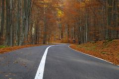 The white line of life (Baubec Izzet) Tags: baubecizzet pentax road autumn forest trees nature