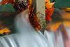 Autumn Leaves (Pitarresi Photo) Tags: leaves feuilles eau water courant autumn automne couleur color rouge red orange longexposures pauselongue exposure highspeed picture wallpaper landscape saison season outdoor extérieur canon canal locks humide humidité scenery scène élément plan grosplan zoom eos digital numérique aquitaine nouvelleaquitaine lotetgaronne garonne france french pics photographie photography photo nature natural wild