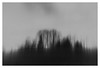 the silence of November (Velaeda) Tags: carinthia knappenberg kärnten bw blur schwarzweis trees nature