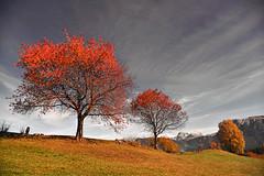 a place to dream... (joachim.d.) Tags: ritten dolomiten herbst autumn rittnerhochplateau plattkofel langkofel schlern rot blätter roteblätter southtirol südtirol
