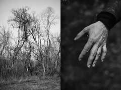 (Ekaterina Izmestieva) Tags: bw blackandwhite diptych forest woods nature trees hand