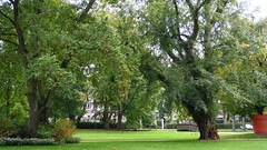 Französischer Garten, Celle (ow54) Tags: celle park garten garden trees bäume