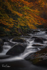 Smoky Beauty (Reid Northrup) Tags: smokymountainnationalpark nationalpark smokys tremont water cascade longexposure river forest tree trees nature landscape rrs nikon reidnorthrup rocks autumn fall