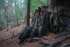 Fantasy forest 5 (Photo Monologue) Tags: forest redwoods fantasy california fall