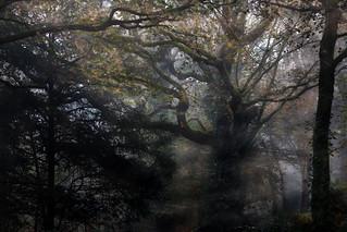 De la puissance des arbres...
