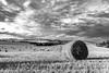 Botte de paille (freddappell) Tags: paille nature campagne champ paysage landscape france noiretblanc blackandwhite bnw bw