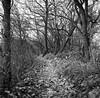 those crooked trees (gato-gato-gato) Tags: 35mm ch carlzeisstessar13575mm iso400 ilford ls600 mxevs noritsu noritsuls600 rolleiflex schleinikon switzerland tlr analog analogphotography believeinfilm film filmisnotdead filmphotography flickr gatogatogato gatogatogatoch homedeveloped tobiasgaulkech wwwgatogatogatoch zürich schweiz black white schwarz weiss bw blanco negro monochrom monochrome blanc noir streetphotography street strasse strase onthestreets streettogs streetpic streetphotographer mensch person human pedestrian fussgänger fusgänger passant suisse svizzera sviss zwitserland isviçre zuerich zurich zurigo zueri landschaft landscape landscapephotography outdoorphotography berge mountains mountain gebirge fels stein stone rock